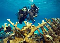dive cozumel discover scuba diving in cozumel cozumel cruise excursions