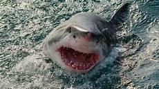 why do sharks bite humans