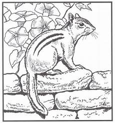 backyard animals and nature coloring books free coloring pages coloring books animal coloring