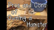 hamster vidéos x pros and cons of owning a hamster