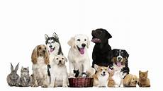 Pets On White Stock Footage 100