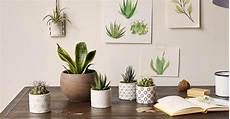 7 best allergen free plants for the workplace bouqs blog