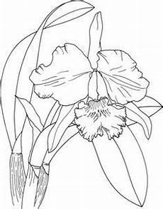 orquidea de venezuela para colorear orqu 237 dea de pascua cattleya dibujo para colorear desenhos de orquideas coisas para desenhar