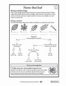 science worksheets leaves 12281 3rd grade 4th grade science worksheets name that leaf greatschools