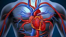 7 Anatomi Jantung Terlengkap Gejala Penyakit