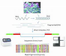 illumina ngs sequencing basic workflow for ngs library preparation rna or dna is