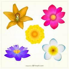Blumen Malvorlagen Kostenlos Bearbeiten Bunte Blumen Pack Kostenlose Vektor