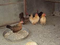 cerco animali da cortile in regalo vendita cucciolo gallina da privato a treviso animali da