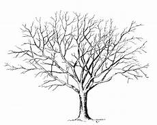 Malvorlage Baum Hochzeit Malvorlage Baum Ohne Bl 228 Tter Baum Zeichnung