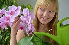 wie oft orchideen gießen orchideen richtig pflegen tipps zum einpflanzen gie 223 en