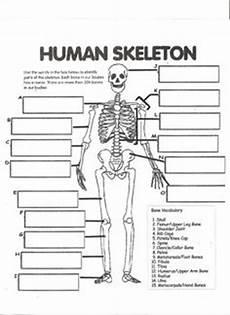 human skeleton worksheet homeschool science human