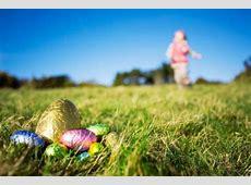 new zealand bunny care
