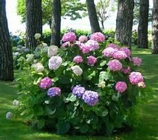 piante di fiori piante e fiori giardino