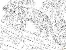 clouded leopard standing on tree coloring