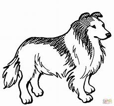collie coloring coloring page