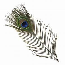 plume de paon 100 cm de avec l oeil