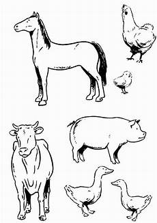 Malvorlagen Tiere Bauernhof Various Type Of Farm Animal Coloring Page Play Color