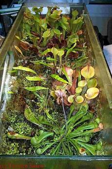 fleischfressende pflanzen im b 252 ro fleischfressende
