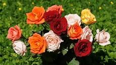 Tes Kepribadian Bunga Mana Yang Menjadi Favoritmu Pilih