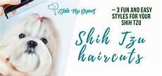 3 most stunning shih tzu haircuts 1 puppy cut 2 teddy bear