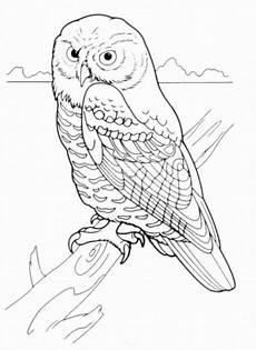 Eulen Malvorlagen Quest Ausmalbilder V 246 Gel Malvorlagen 1 Jpg 426 215 585 Owl
