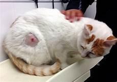 Was Braucht Eine Katze - four legged friends and enemies vets fight to save cat