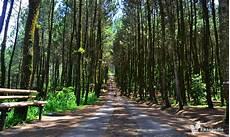 Udah Ke Hutan Pinus Kragilan Di Magelang Swaragama