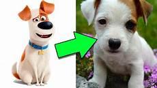 Os Personagens De Pets Na Vida Real