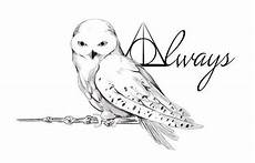 Eule Hedwig Malvorlage Ausmalbilder Eule Hedwig Aiquruguay
