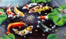 Terbaru 34 Gambar Kartun Ikan Koi