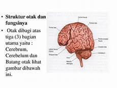 Ppt Anatomi Saraf Powerpoint Presentation Id 228091