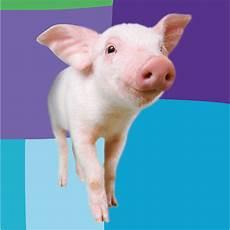 cerco animali da cortile in regalo regala un maiale
