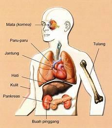 Sudut Science Runchang Mati Otak Pendermaan Organ 3