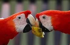 Papagei Kaufen Ebay Aras With Papagei Kaufen Ebay Finest