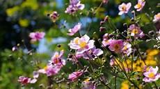 Auch Im Herbst Sorgen Blumen F 252 R Farbe Im Garten