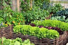 Pflanzen Günstig - summer gardening guide how to create an organic vegetable