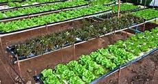 culture hors sol une alternative pour la production bio