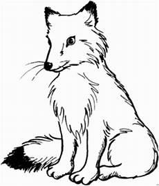 Fuchs Window Color Malvorlagen Fuchs Mit Schwarzem Schwanz Ausmalbild Malvorlage Tiere
