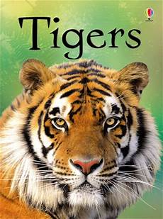 tigers at usborne children s books