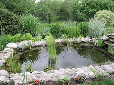 What S Wrong With My Garden Pond Water