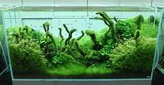 amano aquascape amano aquascaping interior design ideas