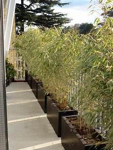 haie pour terrasse une haie de bambou se prot 233 ger du vis 224 vis
