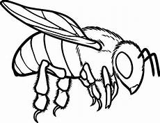 european honey bee coloring pages coloring sky