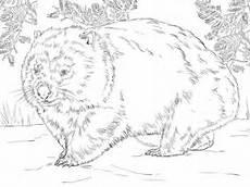 Malvorlagen Zum Ausdrucken Wombat Ausmalbild Realistischer Wombat Ausmalbilder Kostenlos