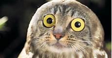 Gambar Burung Hantu Lucu Gambar Viral Hd