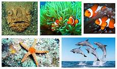 Nama Nama Hewan Yang Hidup Di Laut Daftar Nama Hewan