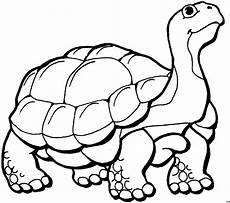 Malvorlagen Gratis Tiere Laufende Schildkroete 2 Ausmalbild Malvorlage Tiere