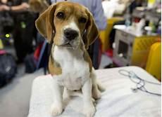 spa mulhouse chien alsace la spa 224 la rescousse de 41 chiens