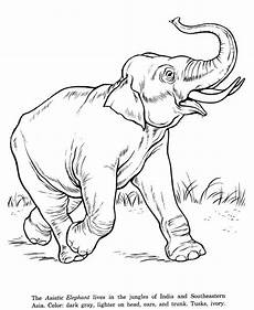 draw so animals coloring pages 17359 elephant zoo coloring pages elephant coloring page animal coloring pages