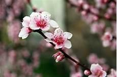 fiore di come un fiorellino di rosmarino aprile 2014